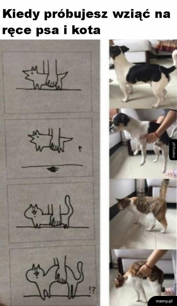 Kotki są inne