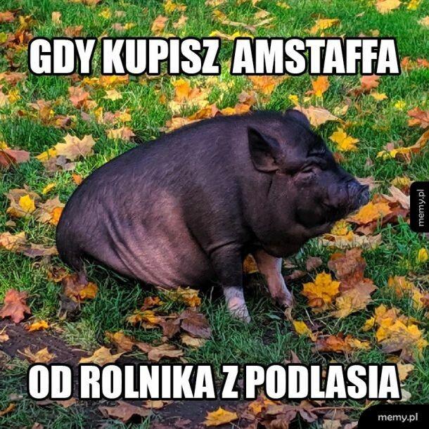Januszek
