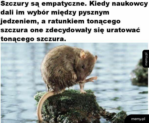 Empatyczne szczury
