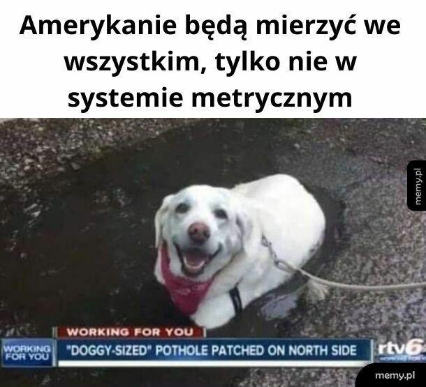 Doggy-sized