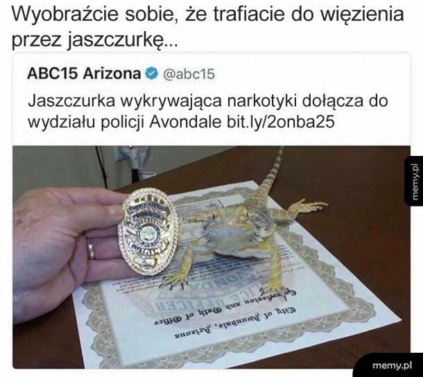 Policyjna jaszczurka
