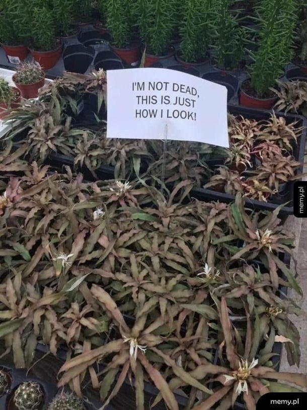 Ciekawe roślinki