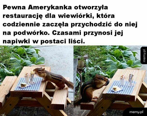 Restauracja dla wiewiórki