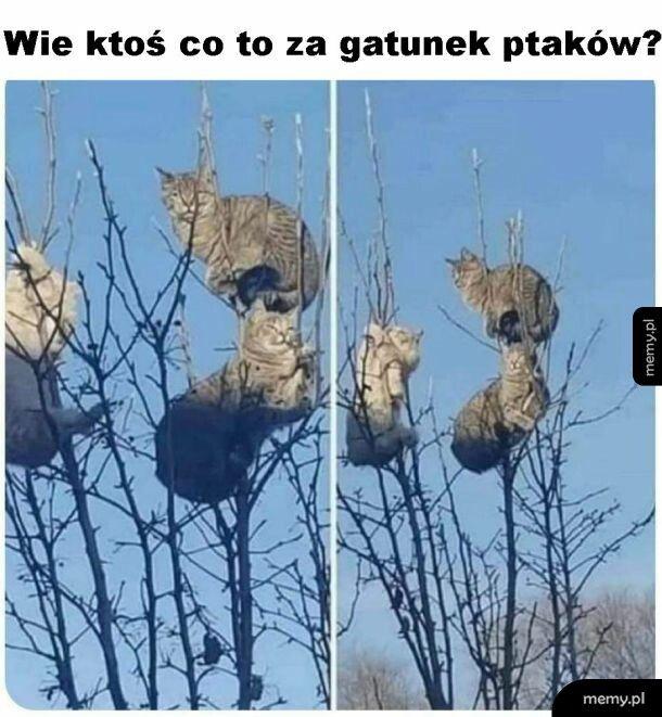 Gatunek ptaków