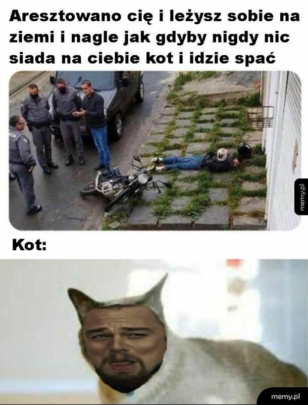 Kot ma wywalone