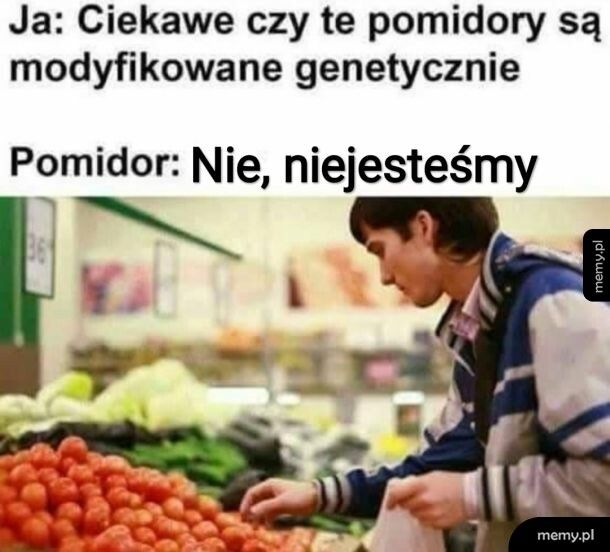 Pomidor GMO