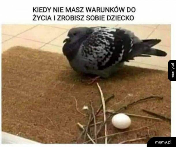 Polskie madki