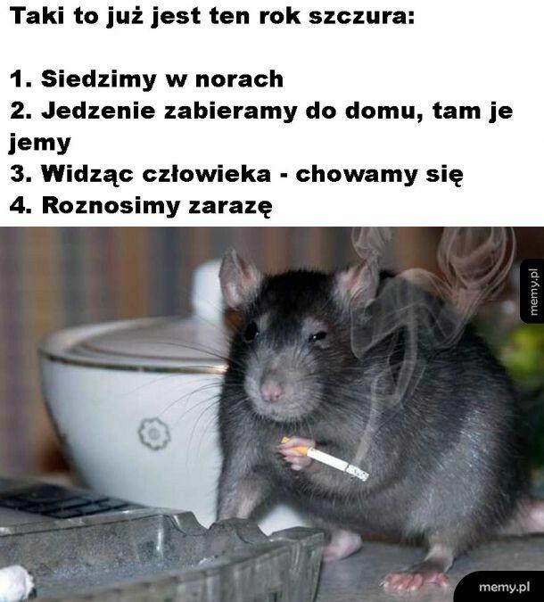 Rok szczura rzeczywiście rokiem szczura