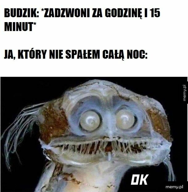 Normalka to jest