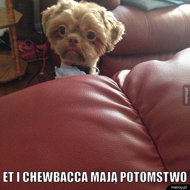 Et i Chewbacca mają potomstwo.