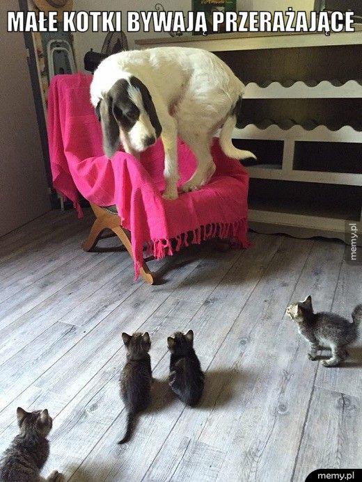małe kotki bywają przerażające
