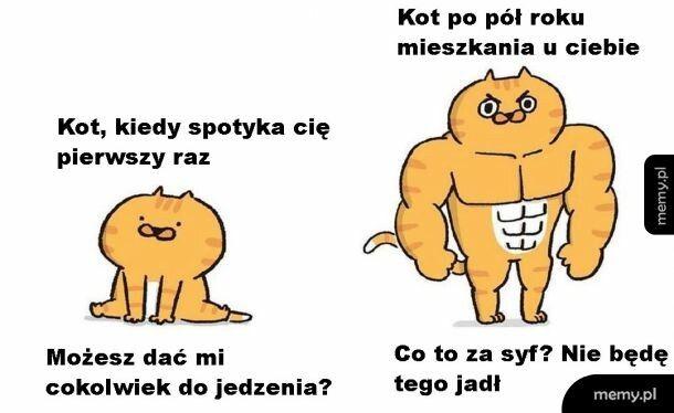 Wybredny kotek