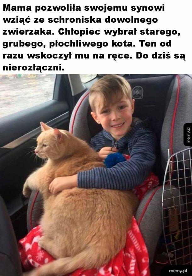 Zasłużona emerytura dla kota