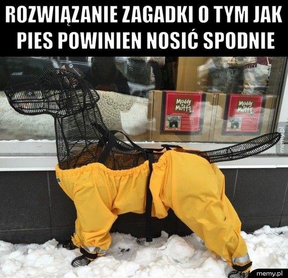Rozwiązanie zagadki o tym jak pies powinien nosić spodnie