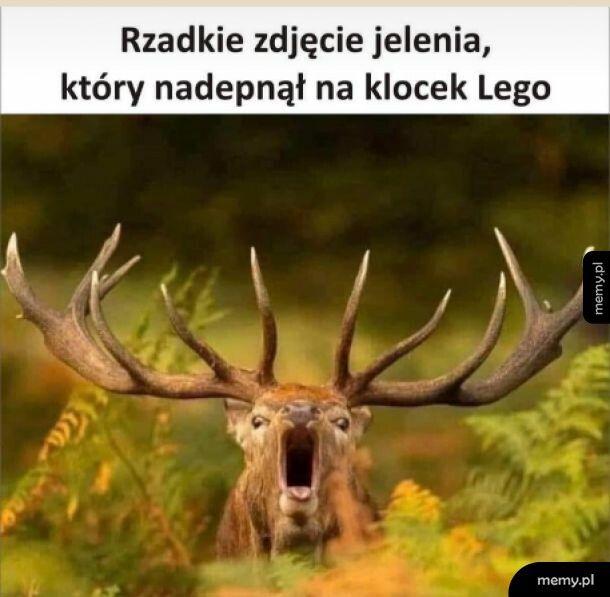 Biedny jeleń