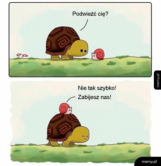 Żółw i ślimak