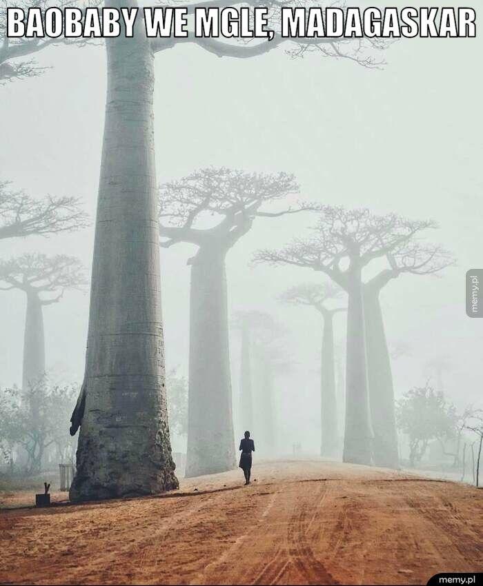Baobaby we mgle, madagaskar