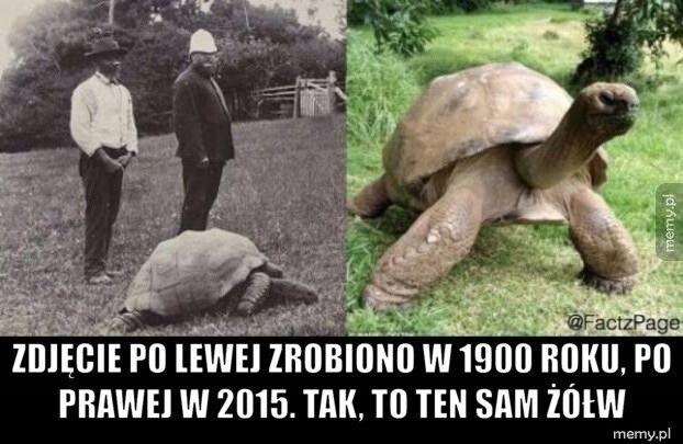 Zdjęcie po lewej zrobiono w 1900 roku, po prawej w 2015. Tak, t