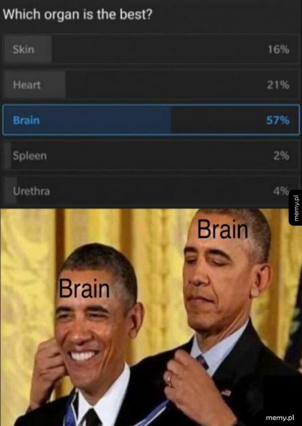 Najwazniejszy narząd
