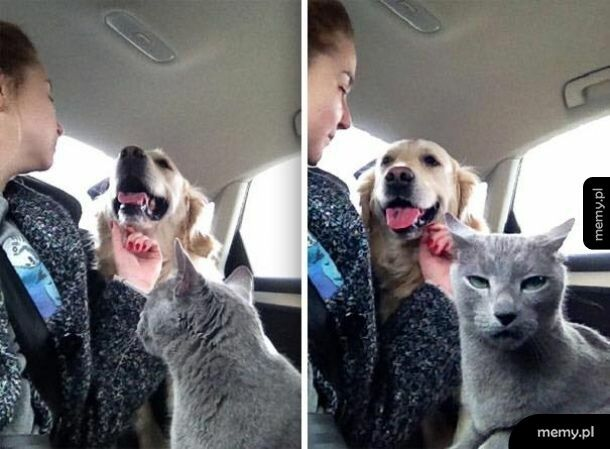 Zazdrosny koteł