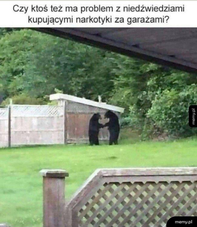Problem z niedźwiedziami
