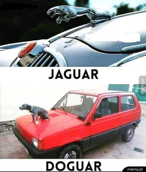 Jaguar vs Doguar