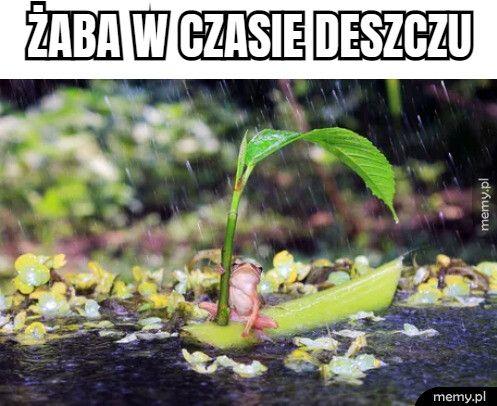 Żaba w czasie deszczu