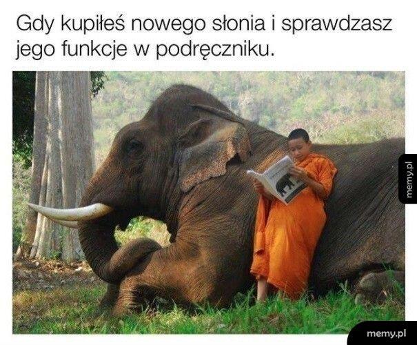 Nowy słoń