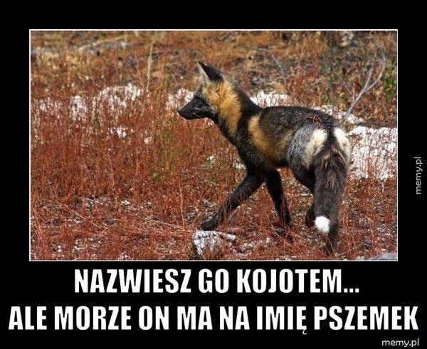 Nazwiesz go kojotem...               ale morze o