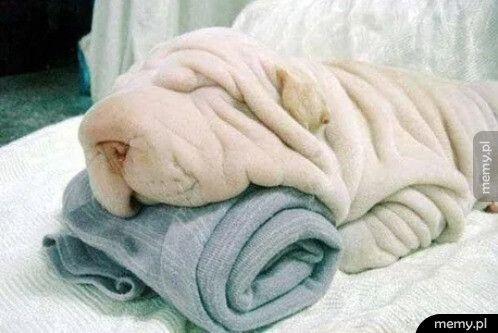 Ile ręczników widzicie na tym zdjęciu?