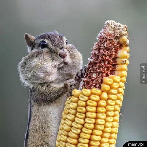 To tylko wiewiórka , scrolluj dalej