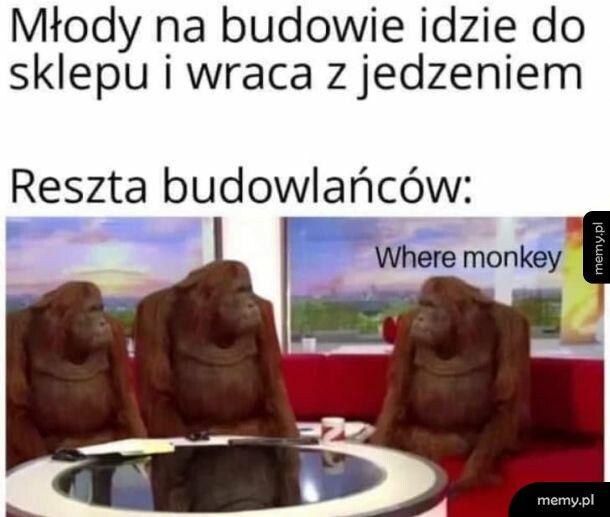 Jak to tak, bez małpki?
