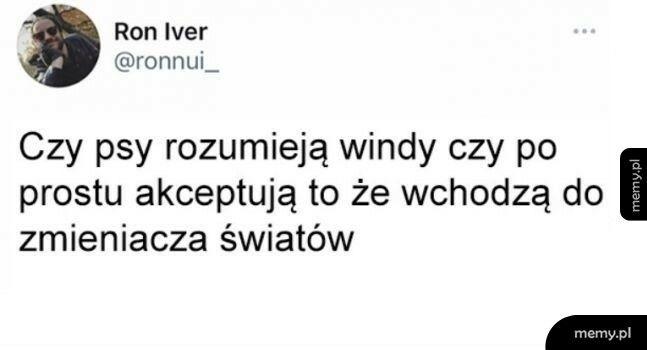 Psy i windy
