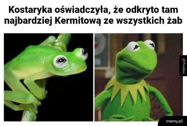 Najbardziej kermitowa żaba