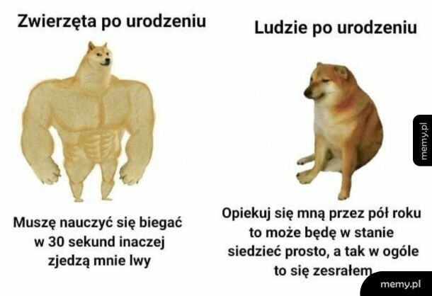 Ewolucje