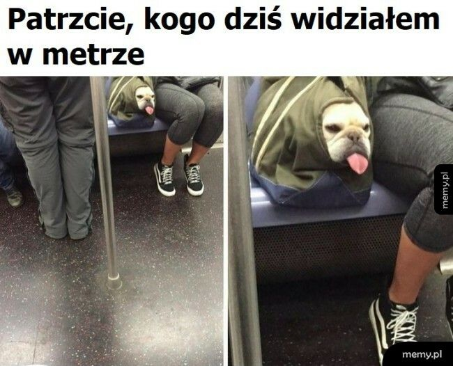 Piesek w metrze