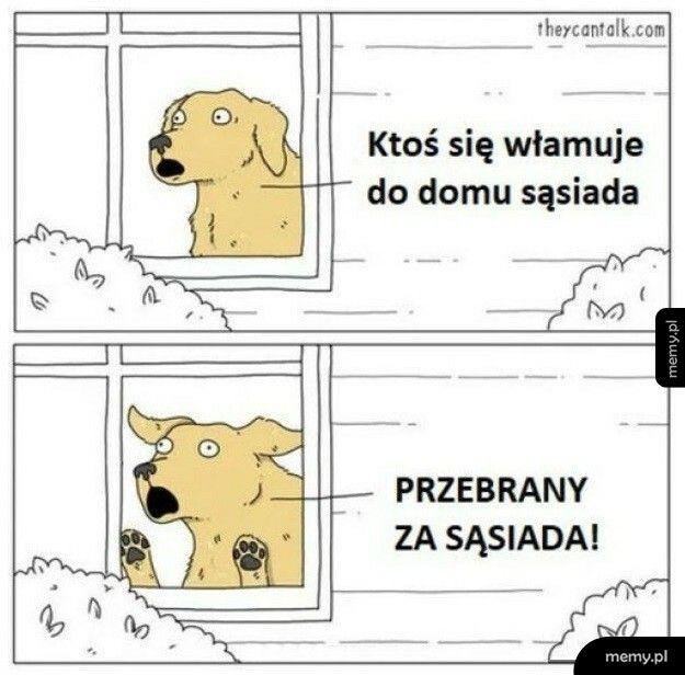 Pies na straży