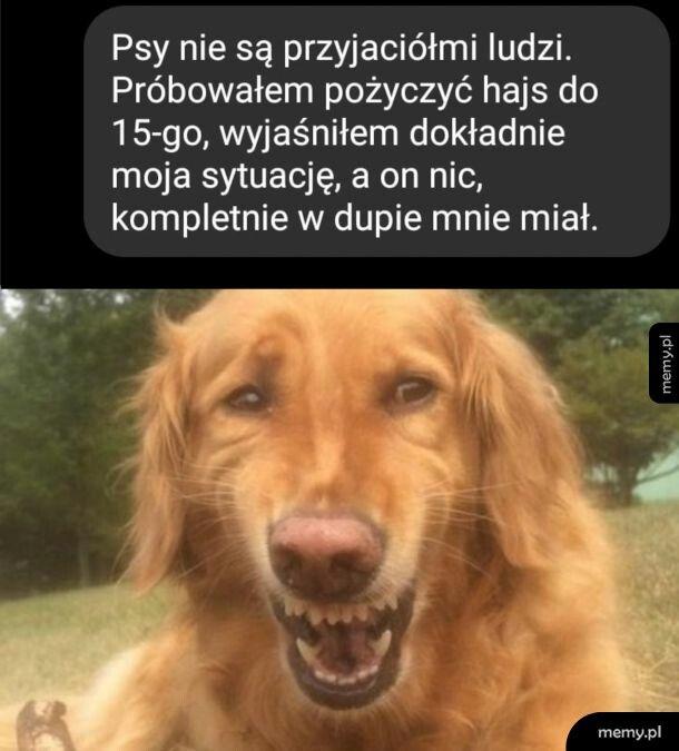 Psy jednak nie są przyjaciółmi ludzi...