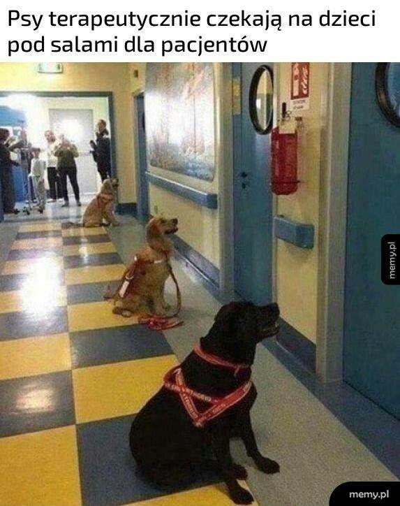 Psy terapeutyczne
