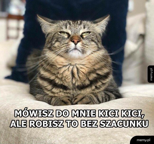 Król kot