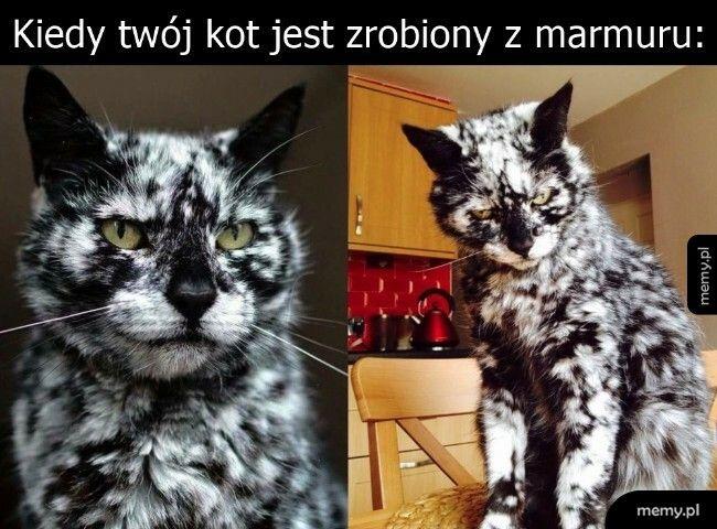 Marmurowy kotek