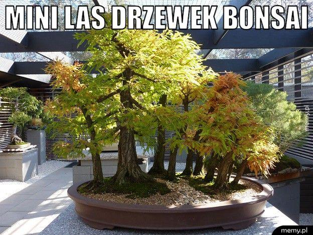 Mini las drzewek bonsai.