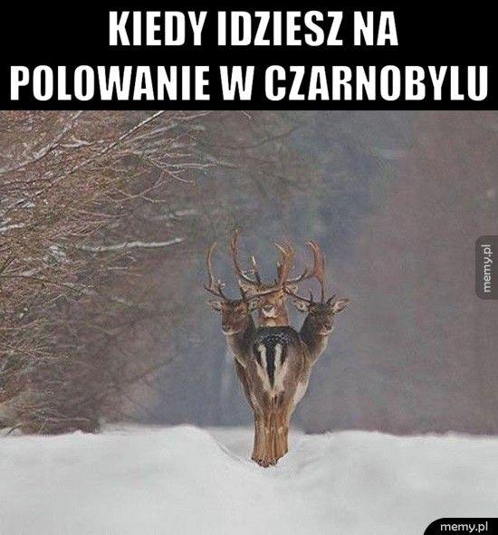 Kiedy idziesz na               polowanie w Czarn