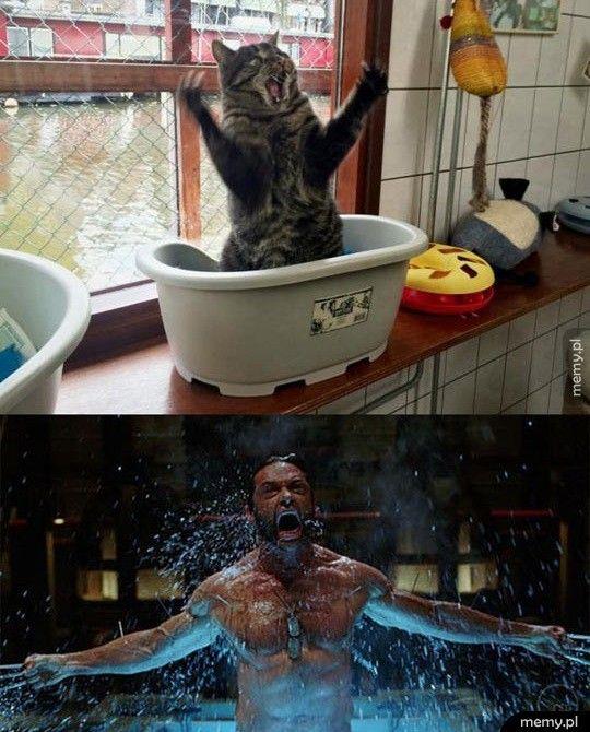 Kiedy twój kot myśli, że jest nieśmiertelny