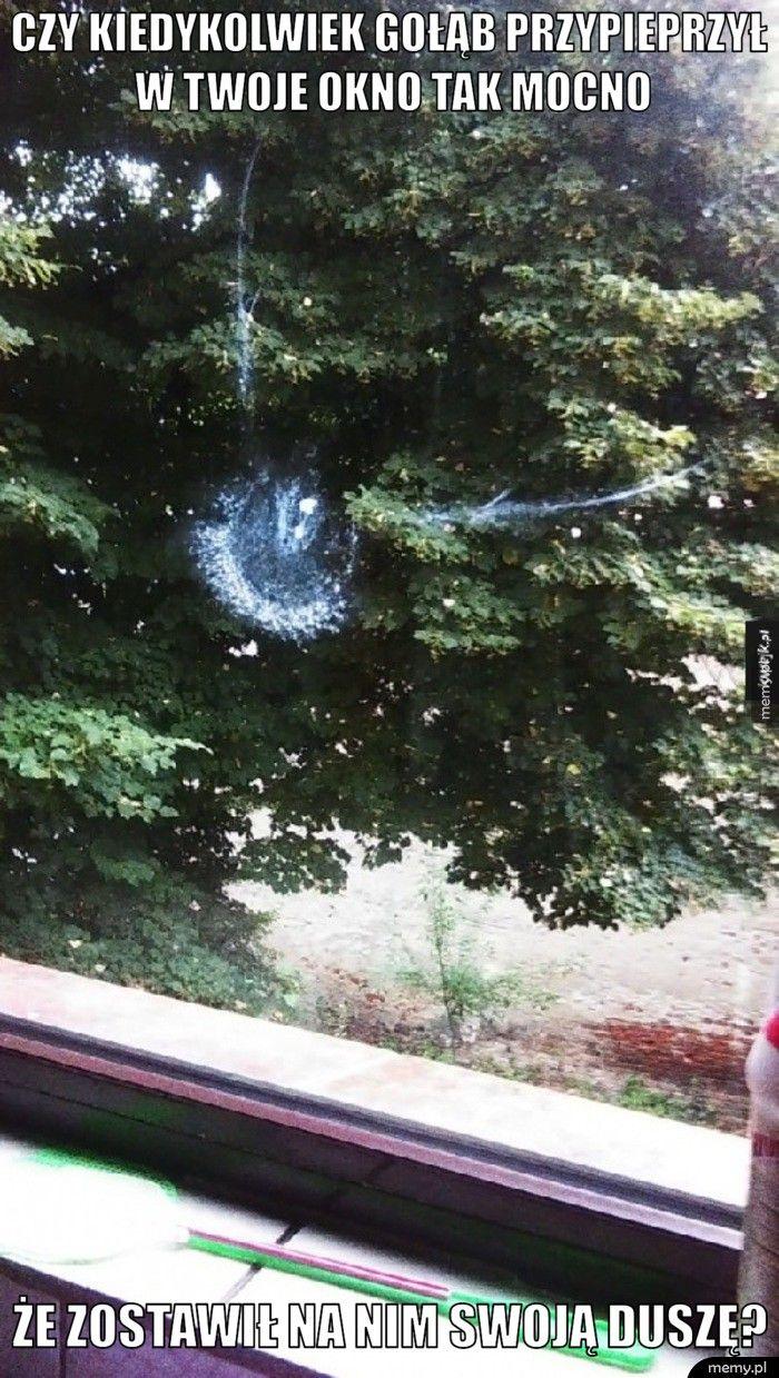 czy kiedykolwiek gołąb przypieprzył w twoje okno tak mocno że zostawił na nim swoją duszę?