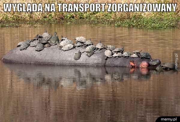 Transport zorganizowany.