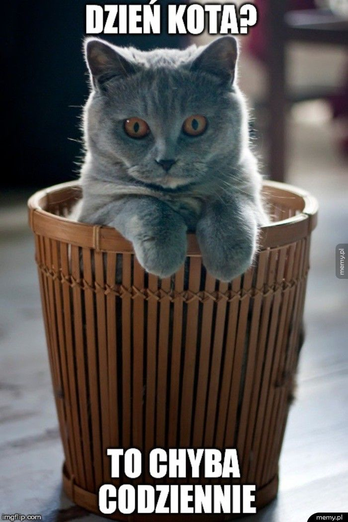 Dzień kota