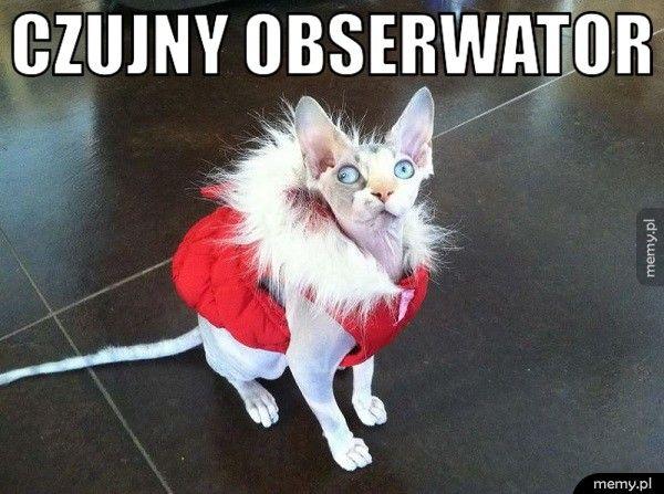 Czujny obserwator