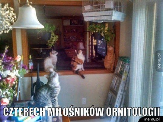 Miłośnicy ornitologii.