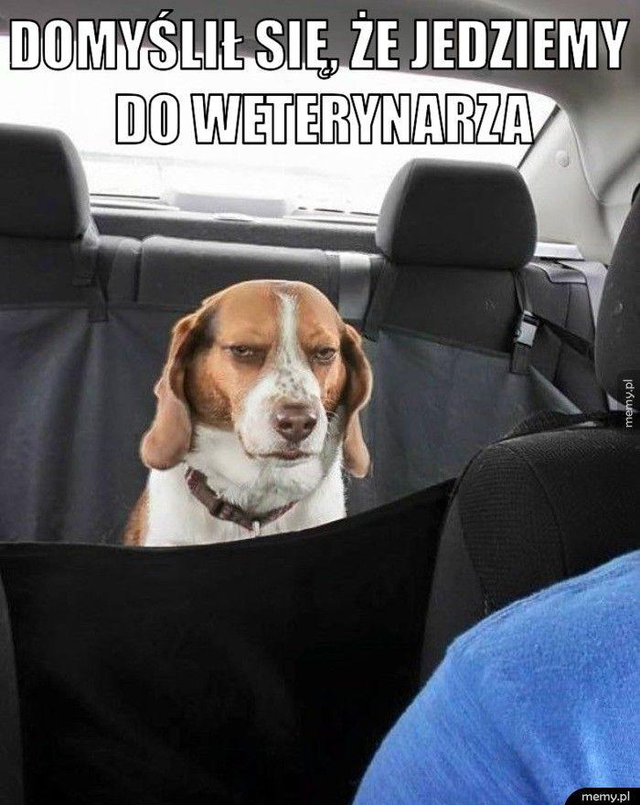 Domyślił się, że jedziemy do weterynarza